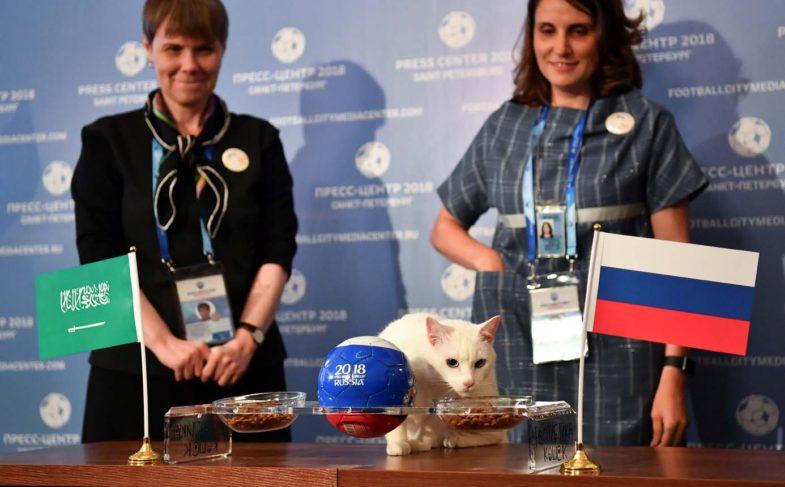 Este gato predice la victoria de Rusia en el partido inaugural